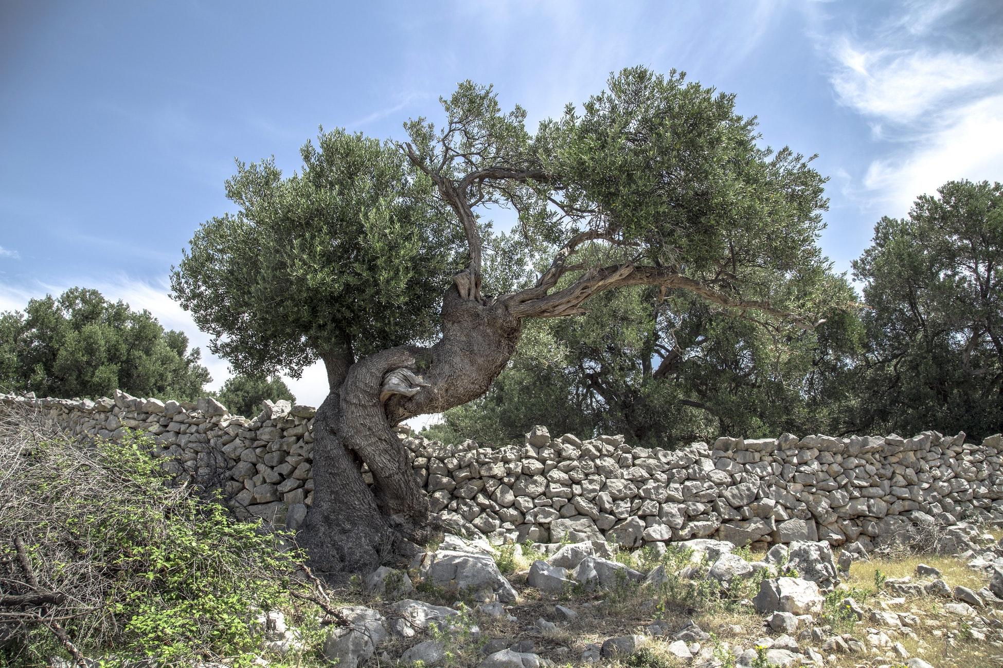 tension tree